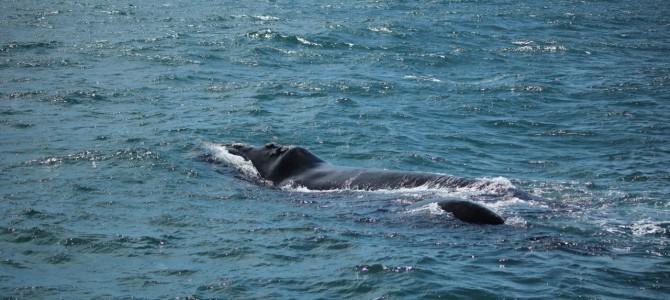 Walvissen en haaien